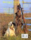 English Setter with ringneck pheasants