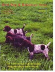 German Shorthair Pointer picture
